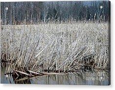 Marsh Land Acrylic Print by Kathleen Struckle