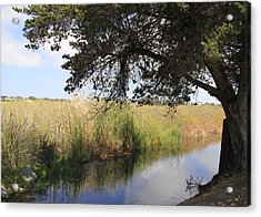 Acrylic Print featuring the photograph Marsh Reflections by Jan Cipolla