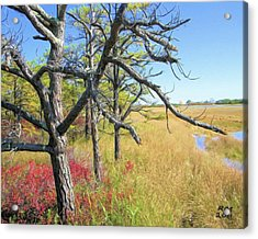 Marsh Trees Acrylic Print