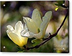 Marvelous Magnolia Acrylic Print by Byron Varvarigos