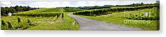 Maryland Vineyard Panorama Acrylic Print by Thomas Marchessault