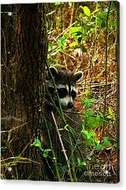 Masked Bandit Acrylic Print by Dawn Williamson