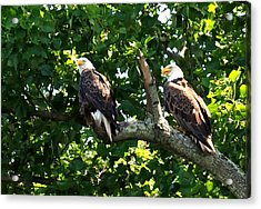 Acrylic Print featuring the photograph Mating Pair by Randall Branham