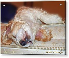 Mattress Tester Acrylic Print by Debbie Portwood