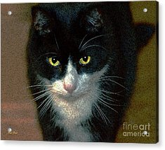 Max Acrylic Print by Dale   Ford