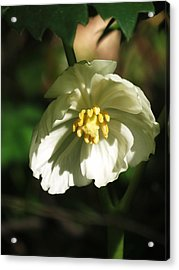 Acrylic Print featuring the photograph Mayapple Blossom by Rebecca Overton