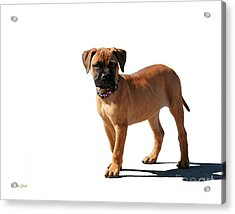 Me And My Shadow 2 Acrylic Print by Dale   Ford