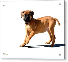 Me And My Shadow 3 Acrylic Print by Dale   Ford