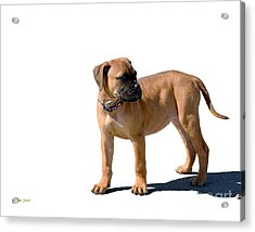 Me And My Shadow 4 Acrylic Print by Dale   Ford