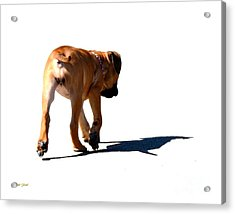 Me And My Shadow Acrylic Print by Dale   Ford