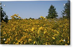 Meadow At Terapin Park Acrylic Print by Charles Kraus
