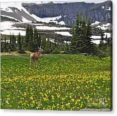 Acrylic Print featuring the photograph Meadow Deer by Johanne Peale
