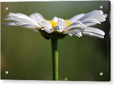 Meadow Pedals Acrylic Print