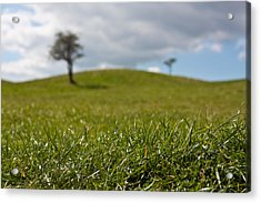 Meadow Acrylic Print by Semmick Photo