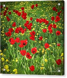 Meadow With Tulips Acrylic Print