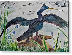 Anhinga-drying Out Acrylic Print by Mickey Krause