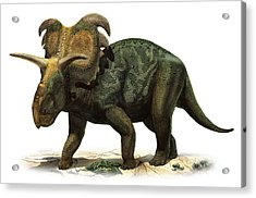 Medusaceratops Lokii, A Prehistoric Era Acrylic Print by Sergey Krasovskiy