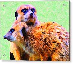Meerkats . 7d4176 Acrylic Print by Wingsdomain Art and Photography