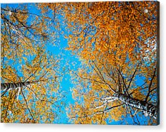 Meet In Heaven. Autumn Glory Acrylic Print by Jenny Rainbow