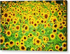 Mellow Yello Acrylic Print by Emily Stauring