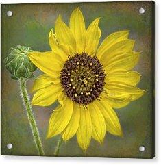 Mellow Yellow Acrylic Print by Hazel Billingsley