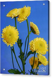Mellow Yellow Acrylic Print by Nancie DeMellia