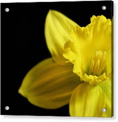 Mellow Yellow Acrylic Print by Peter Chilelli