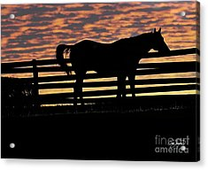 Memorial Day Weekend Sunset In Georgia - Horse - Artist Cris Hayes Acrylic Print by Cris Hayes
