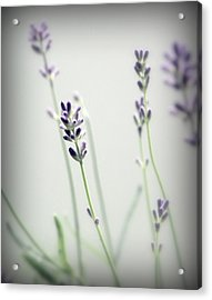 Acrylic Print featuring the photograph Memories Of Provence by Brooke T Ryan