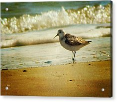 Memories Of Summer Acrylic Print by Amy Tyler