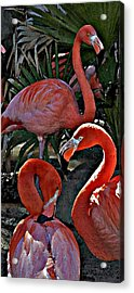 Acrylic Print featuring the photograph Menage A Trois by Cheri Randolph