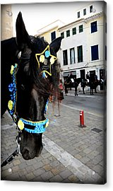 Acrylic Print featuring the photograph Menorca Horse 1 by Pedro Cardona