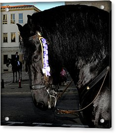 Acrylic Print featuring the photograph Menorca Horse 2 by Pedro Cardona