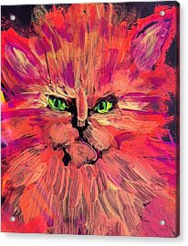Meow Acrylic Print by Gail Eisenfeld