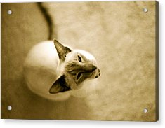 Acrylic Print featuring the photograph Meow by Lenny Carter