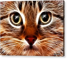 Meow Acrylic Print by Stephen Younts