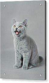 Meow Acrylic Print by Waldek Dabrowski