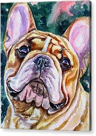 Mesmerizing Eyes Acrylic Print by Lyn Cook