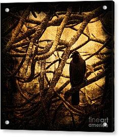 Messenger Acrylic Print by Andrew Paranavitana