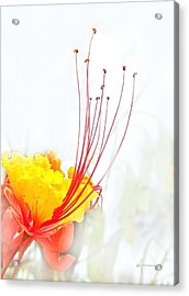 Mexican Bird Of Paradise Acrylic Print by Kume Bryant