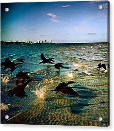 #miami #nature #birds #sea #beach #keys Acrylic Print