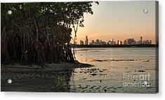 Miami With Mangroves Acrylic Print