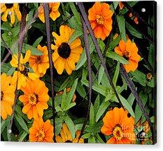 Michigan Summer Acrylic Print