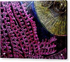 Micro Beetle Phase Two Acrylic Print by Lisa Brandel
