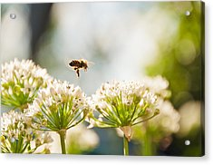 Acrylic Print featuring the photograph Mid-pollenation by Cheryl Baxter