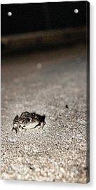 Midnight Frog Acrylic Print