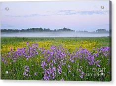Midnight Light With Flowers Acrylic Print by Conny Sjostrom