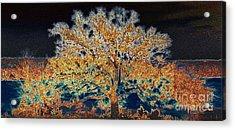 Midnight Moonshine Acrylic Print by David Carter
