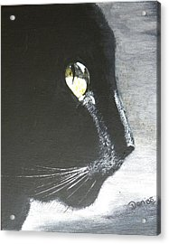 Midnight Prowler Acrylic Print by Denise Hills