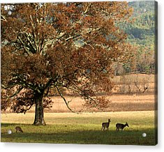 Mighty Oak Acrylic Print